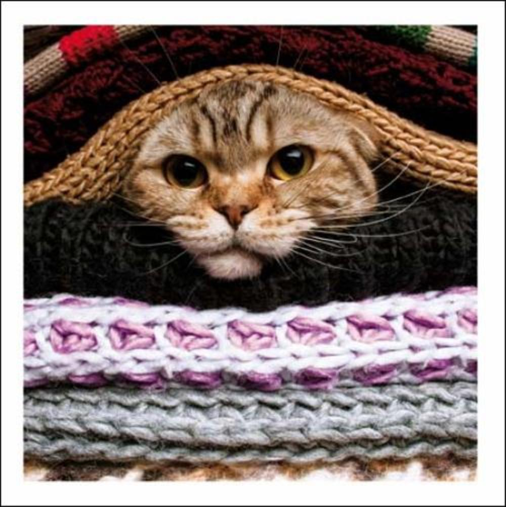 Duvet Day Cute Cat Cattitude Greeting Card