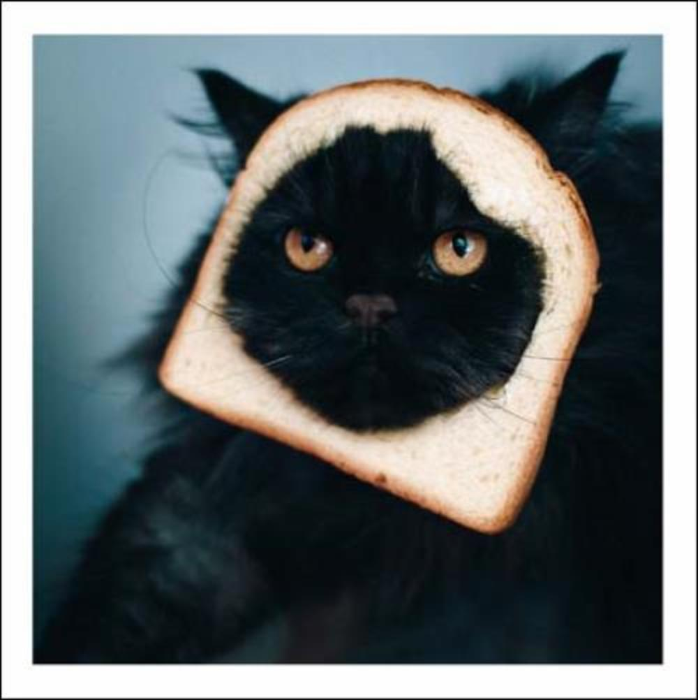 For When I Get Peckish... Cattitude Greeting Card