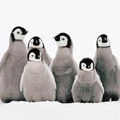 Pack of 8 Mini Penguin Stroke Association Charity Christmas Cards
