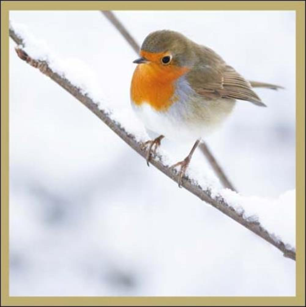 Pack of 5 Robin Children With Cancer Charity Christmas Cards