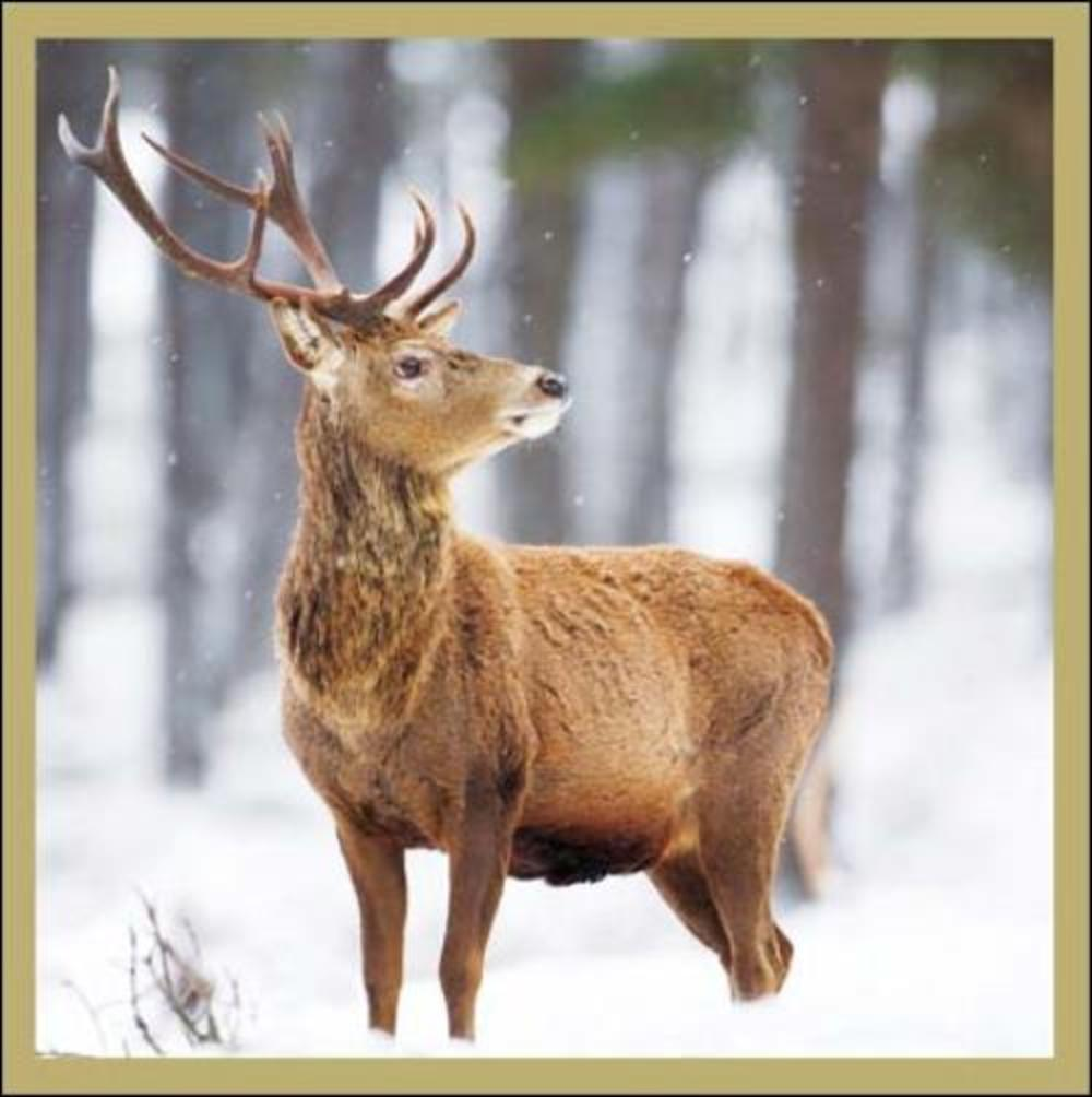 Pack of 5 Deer In Snow Samaritans Charity Christmas Cards