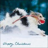 Pack of 5 Dog In Snow Alzheimer's Society Charity Christmas Cards