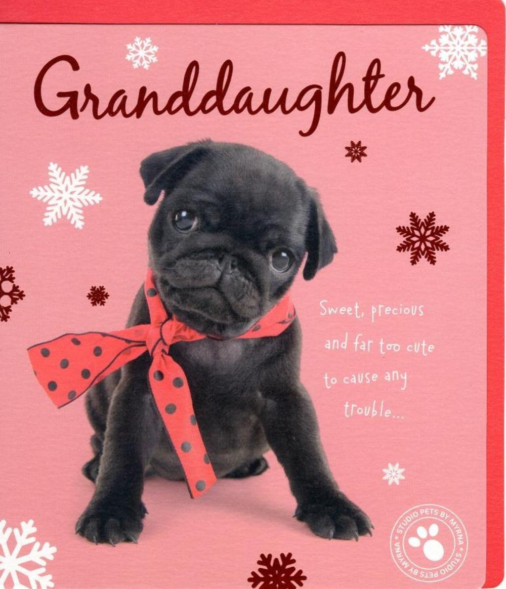 Granddaughter Cute Studio Pets Christmas Greeting Card