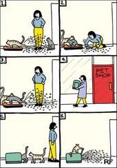 Funny Cat Litter Cartoon Cat Humour Greeting Card