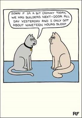 Only 19 Hours Sleep Cartoon Cat Humour Greeting Card