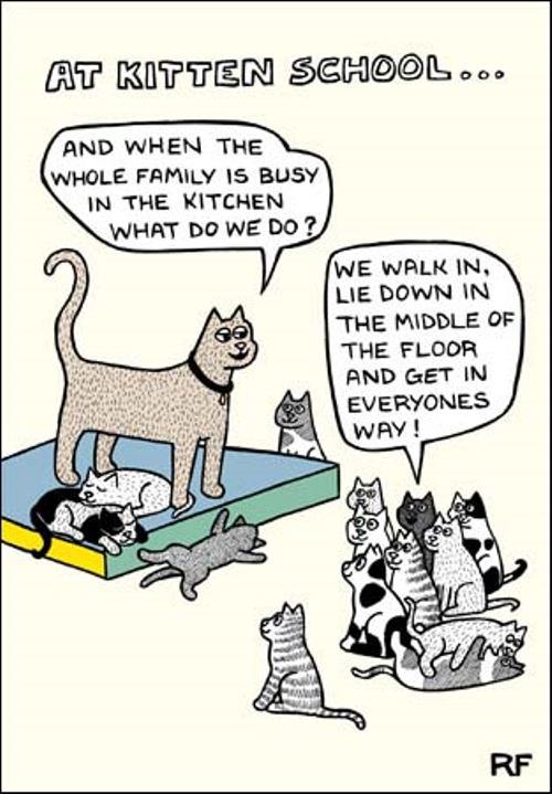 At kitten school cartoon cat humour greeting card cards love cartoon cat humour greeting card m4hsunfo