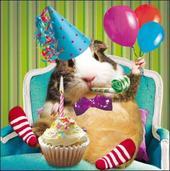 Guinea Pig Birthday Greeting Card