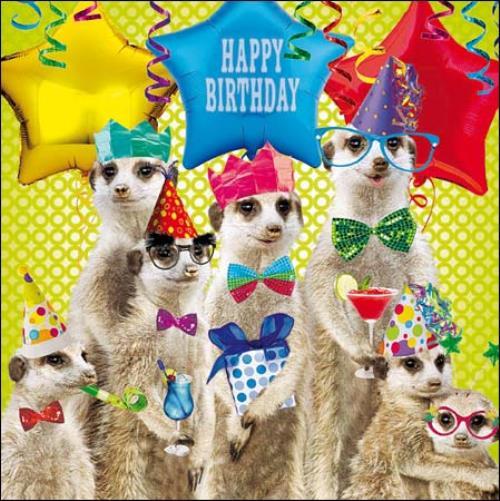 Meerkat Birthday Greeting Card Cards Love Kates