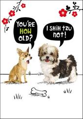 I Shih Tzu Not Birthday Funny Birthday Card