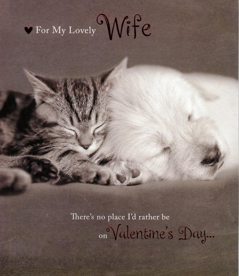 Wife Cute Kitten Puppy Valentine S Day Greeting Card Cards