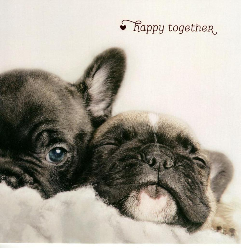 Happy Together Cute Dogs Valentine's Day Card