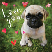 Pug Love You 3D Holographic Valentine's Day Card