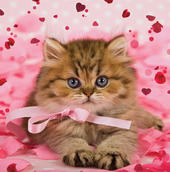 Pussy Cat 3D Holographic Valentine's Day Card