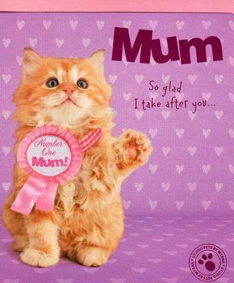 Cute Cat Best Mum Happy Mother's Day Card