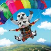 3D Holographic Meerkat Skydive Birthday Card