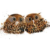 Pair Owls Animal Magic Square Art Greeting Card
