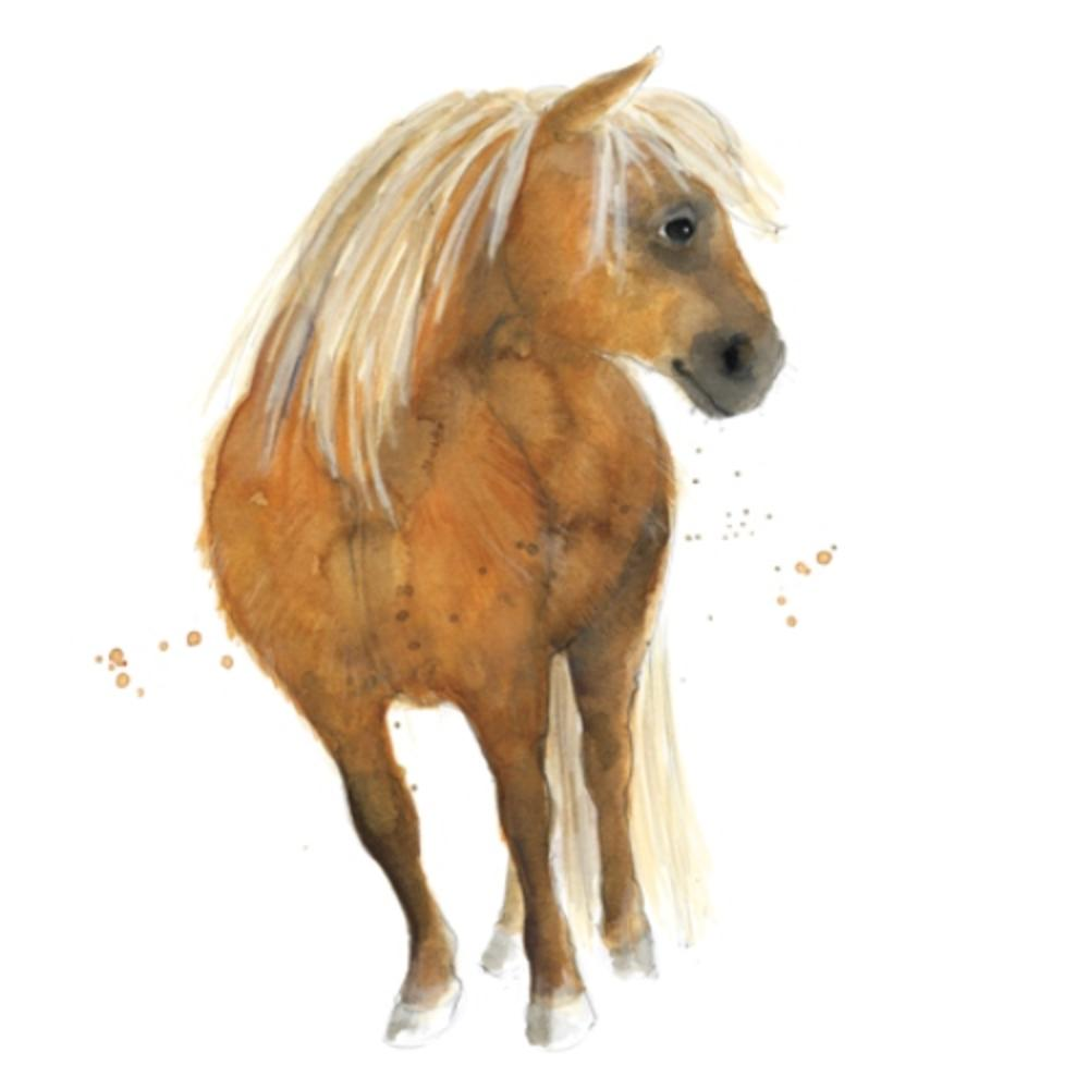 Shetland Pony Animal Magic Square Art Greeting Card