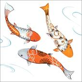 Koi Carp Wildlife Square Art Greeting Card