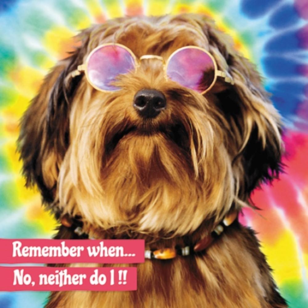Avanti Old Dog Birthday Greeting Card