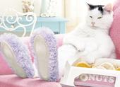 Avanti Cat Slippers Donuts Birthday Greeting Card