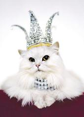 Avanti Queen Cat Birthday Greeting Card