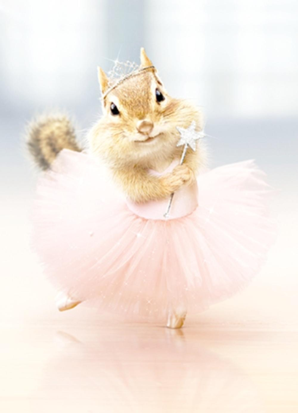 Avanti Squirrel In Tutu Birthday Greeting Card