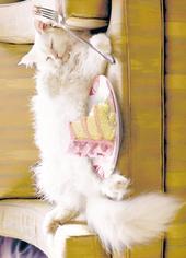 Avanti Cat Eating Cake Birthday Greeting Card