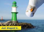 Avanti Funny Seagull Birthday Greeting Card
