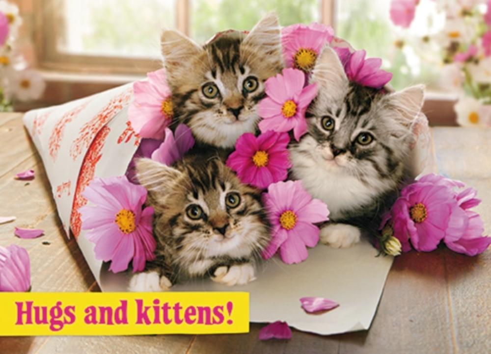 Avanti Nan Birthday Humour Greeting Card Cards Love Kates