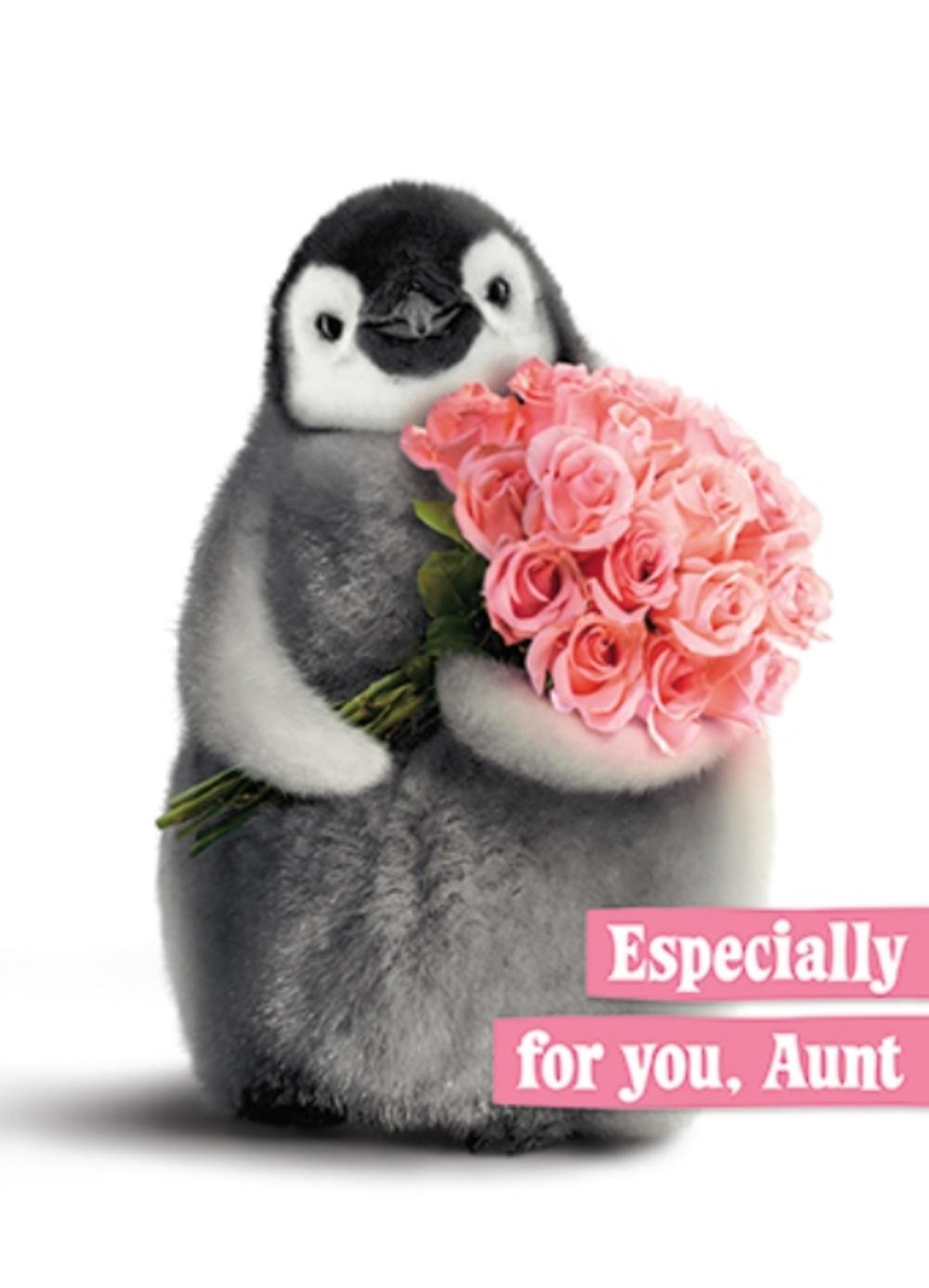 Avanti Aunt Birthday Humour Greeting Card