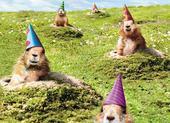 Avanti Meerkats Holographic Motion Birthday Card