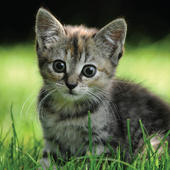 3D Holographic Kitten Greeting Card Blank Inside