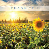 Pack of 5 Blank Thank You Greeting Cards Blank Inside