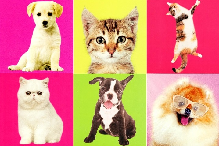 assorted pack of 6 cat dog greeting cards blank inside - Dog Greeting Cards