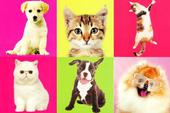Assorted Pack of 6 Cat & Dog Greeting Cards Blank Inside