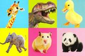 Assorted Pack of 6 Animal Greeting Cards Blank Inside