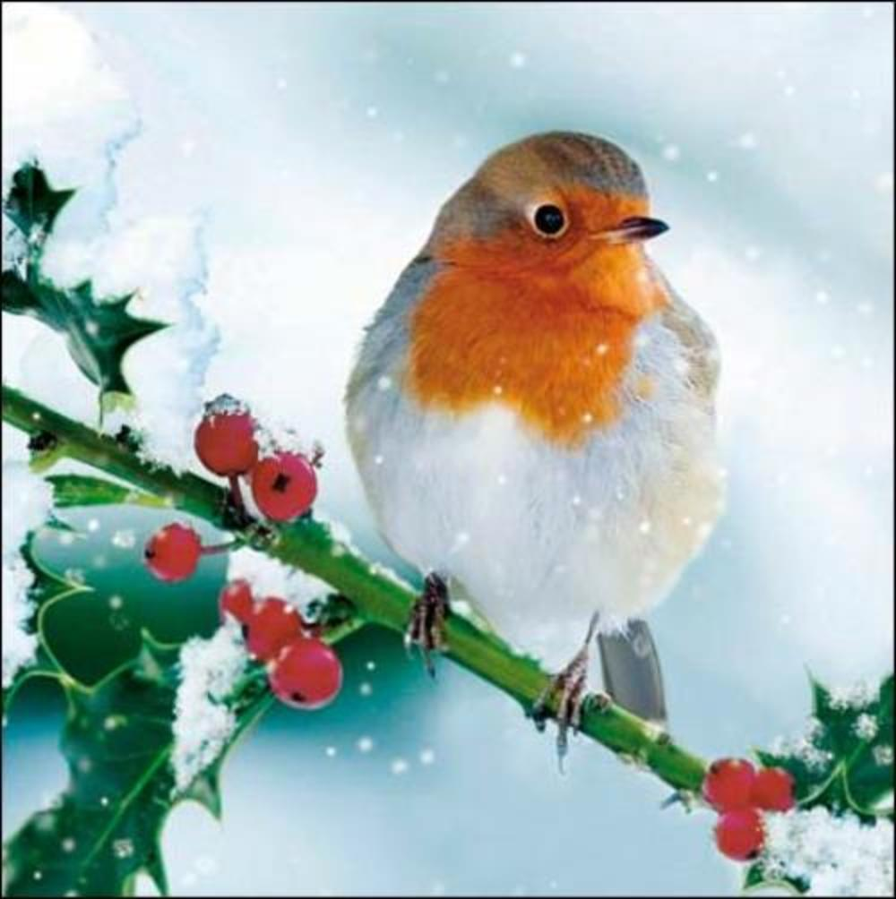 Pack of 5 Xmas Robin Childline Charity Christmas Cards