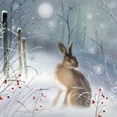 Pack of 8 Magical Hare Multiple Sclerosis Fairdeal Charity Christmas Cards
