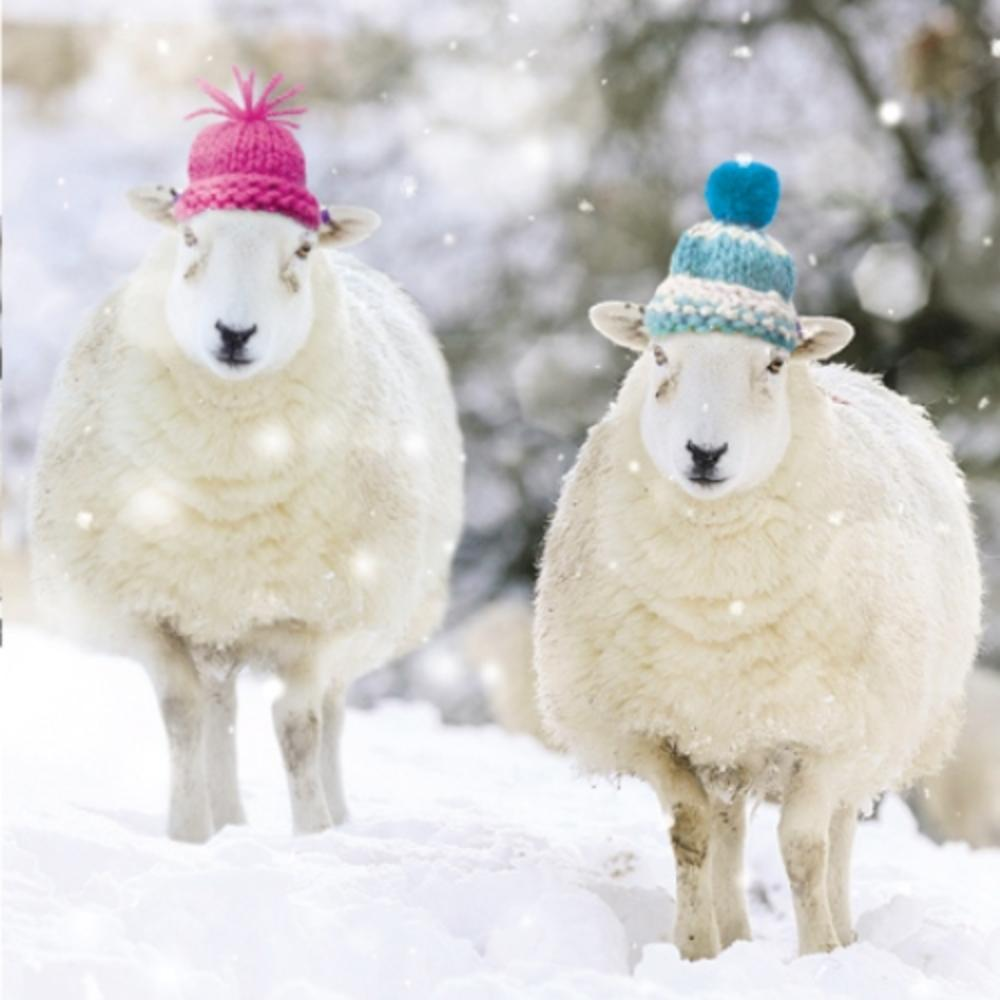 Pack of 8 Woolly Sheep National Autistic Society Fairdeal Charity Christmas Cards