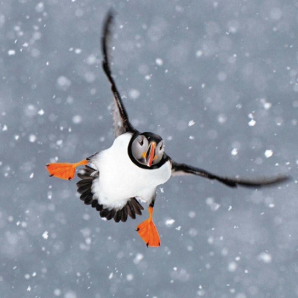 Pack of 8 Puffin In Snow Epilepsy Action Fairdeal Charity Christmas Cards