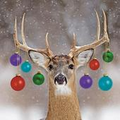 Pack of 6 Decorated Deer Charity Christmas Cards Supports Multiple Charities