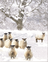 Pack of 10 RSPCA Charity Christmas Cards