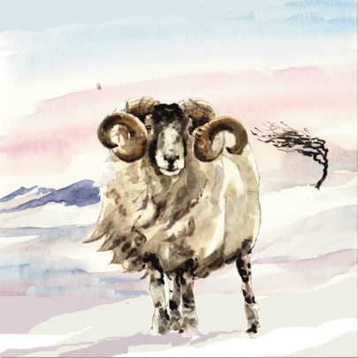 Pack of 10 Sheep Alzheimer's Society Charity Christmas Cards