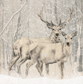 Pack of 8 Snowy Deers Marie Curie Charity Christmas Cards