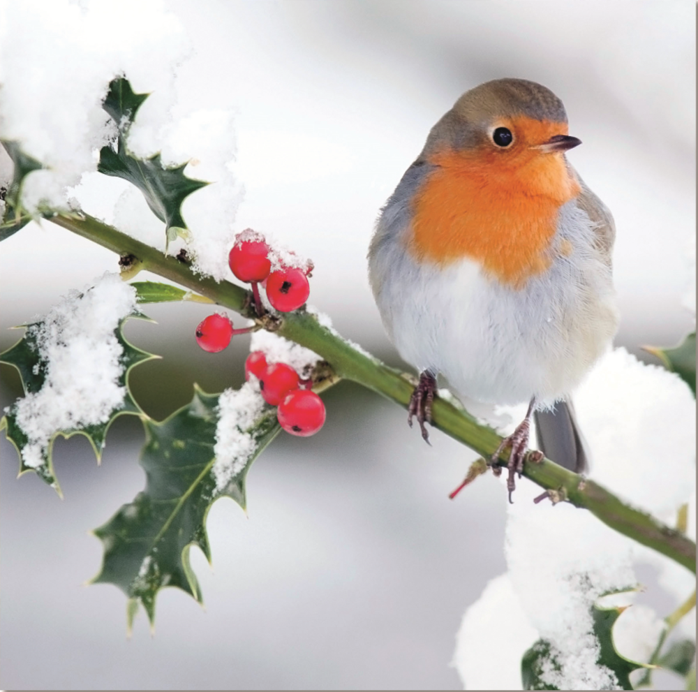 Pack of 8 Festive Robin Marie Curie Charity Christmas Cards