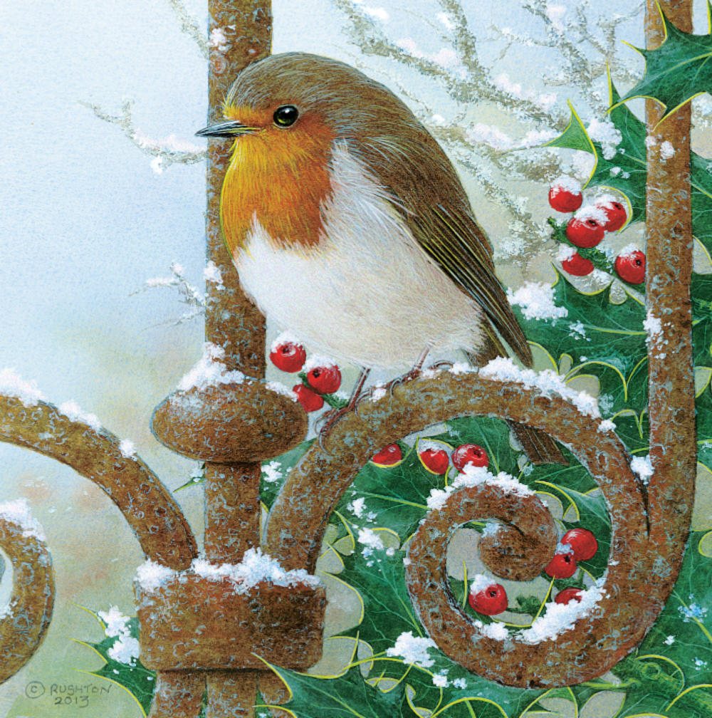 Pack of 5 Christmas Robin Traditional Christmas Cards