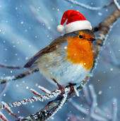 3D Holographic Robin Christmas Greeting Card