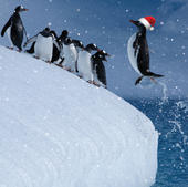 3D Holographic Penguin Christmas Greeting Card