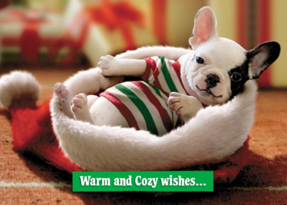 Avanti Nephew Funny Christmas Greeting Card