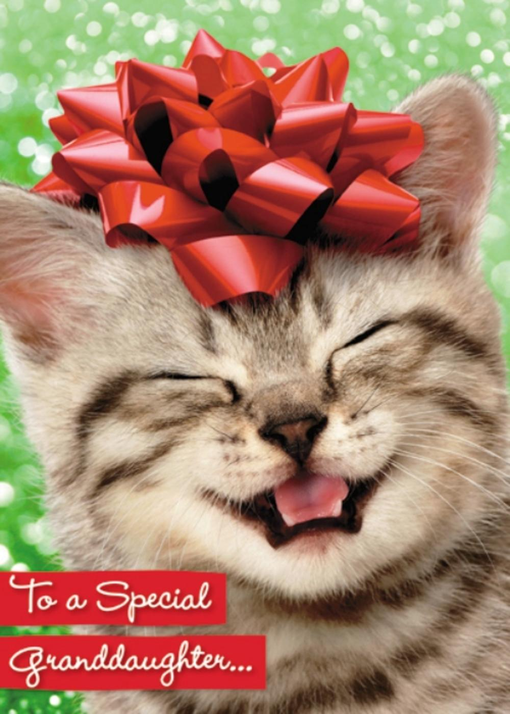 Avanti Granddaughter Funny Christmas Greeting Card
